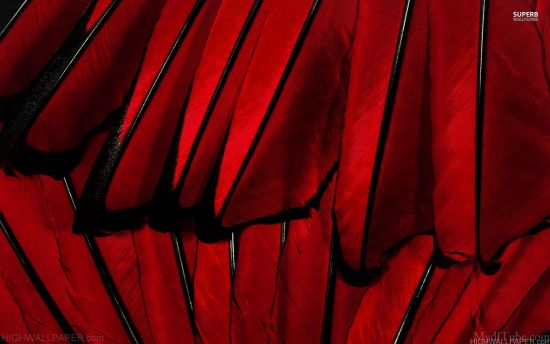 Red feather background