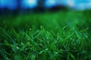 Close-Up-Grass-Wallpaper