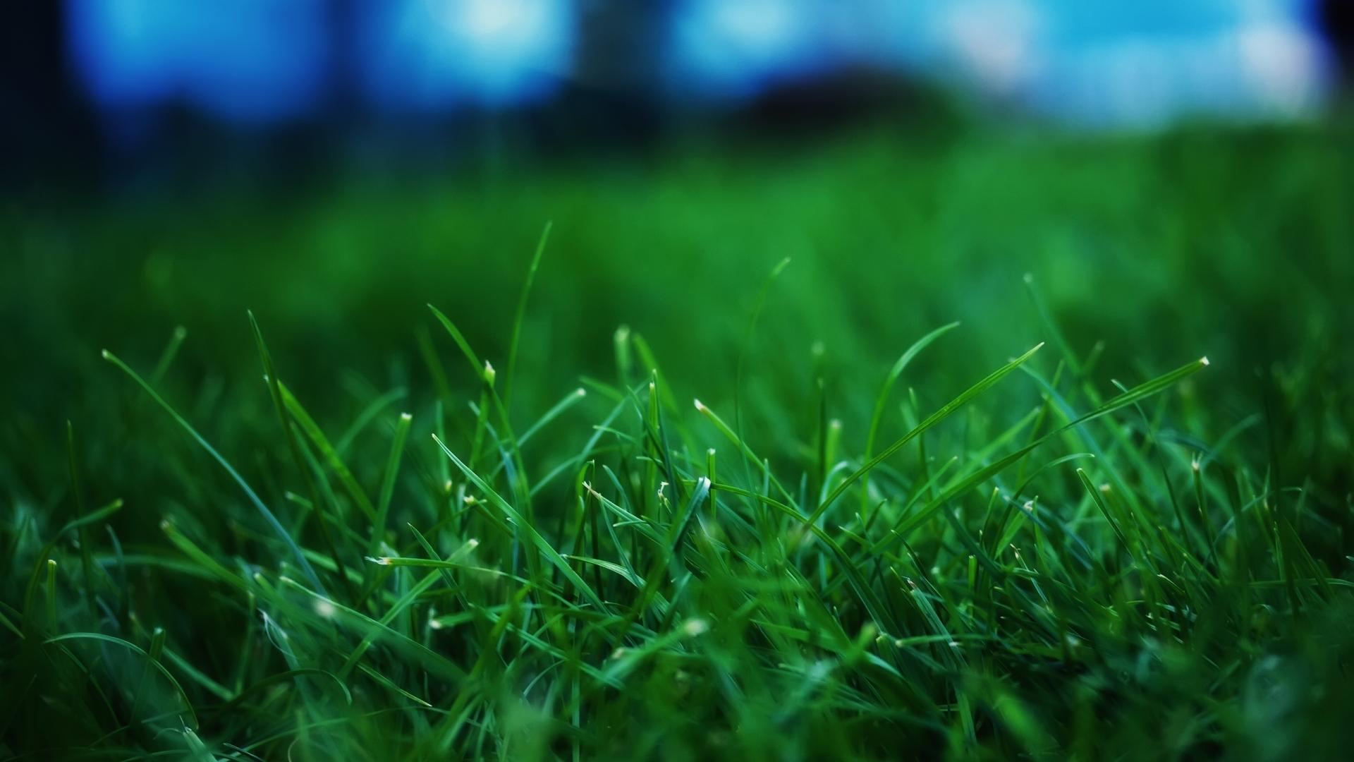 Close-Up-Grass-Wallpaper