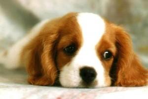 Cute Puppy Staring
