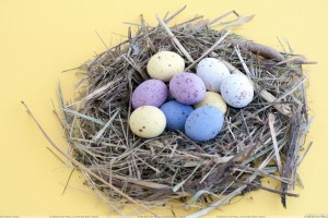 Eggs In Nest And Yellow Background