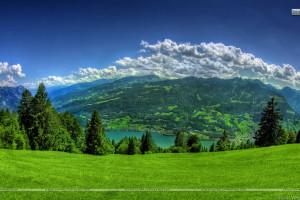 Green Grass Looking Beautiful
