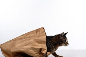 High-resolution-cat-out-of-bag-wallpaper