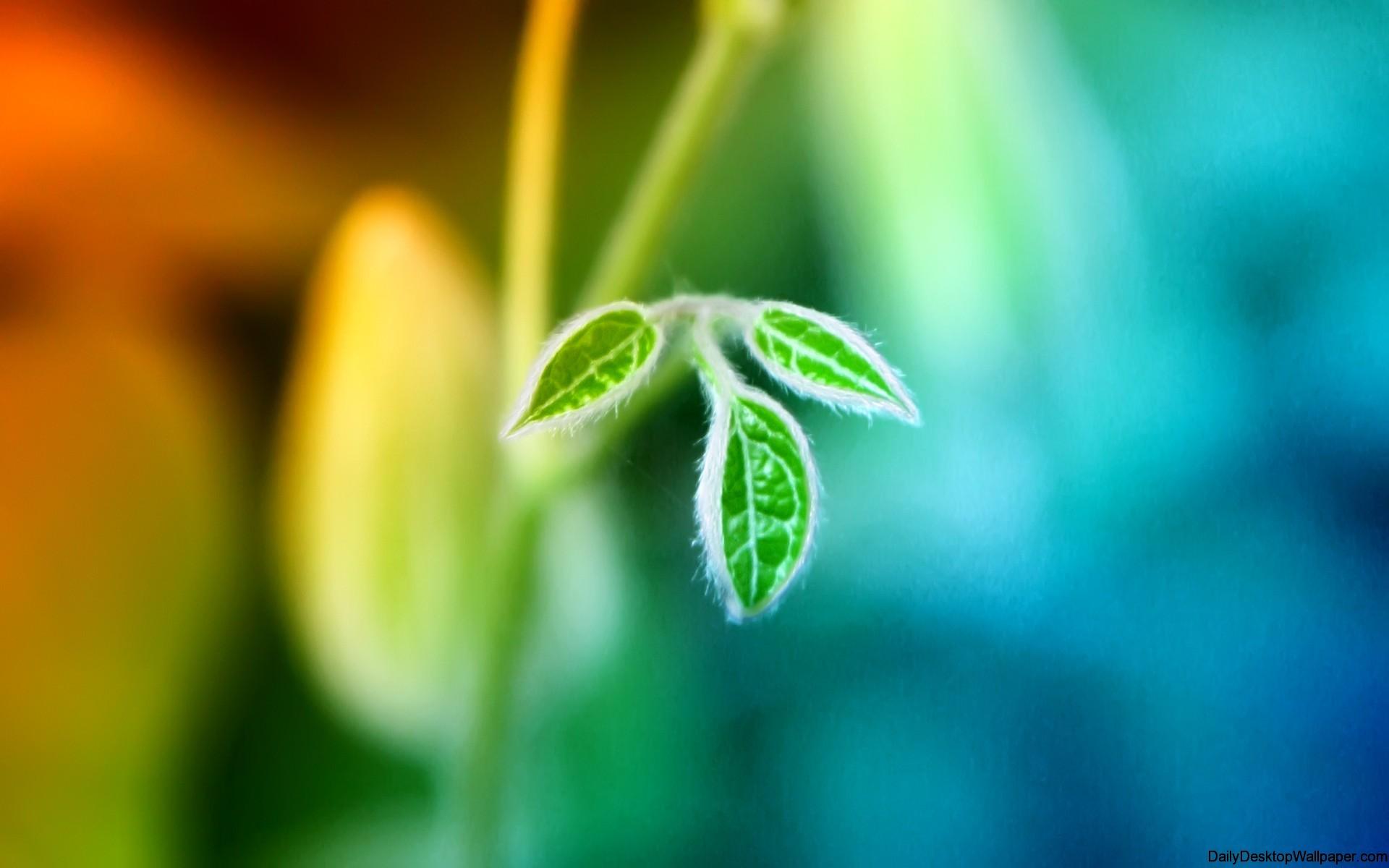 High-resolution-up-close-leaf-wallpaper