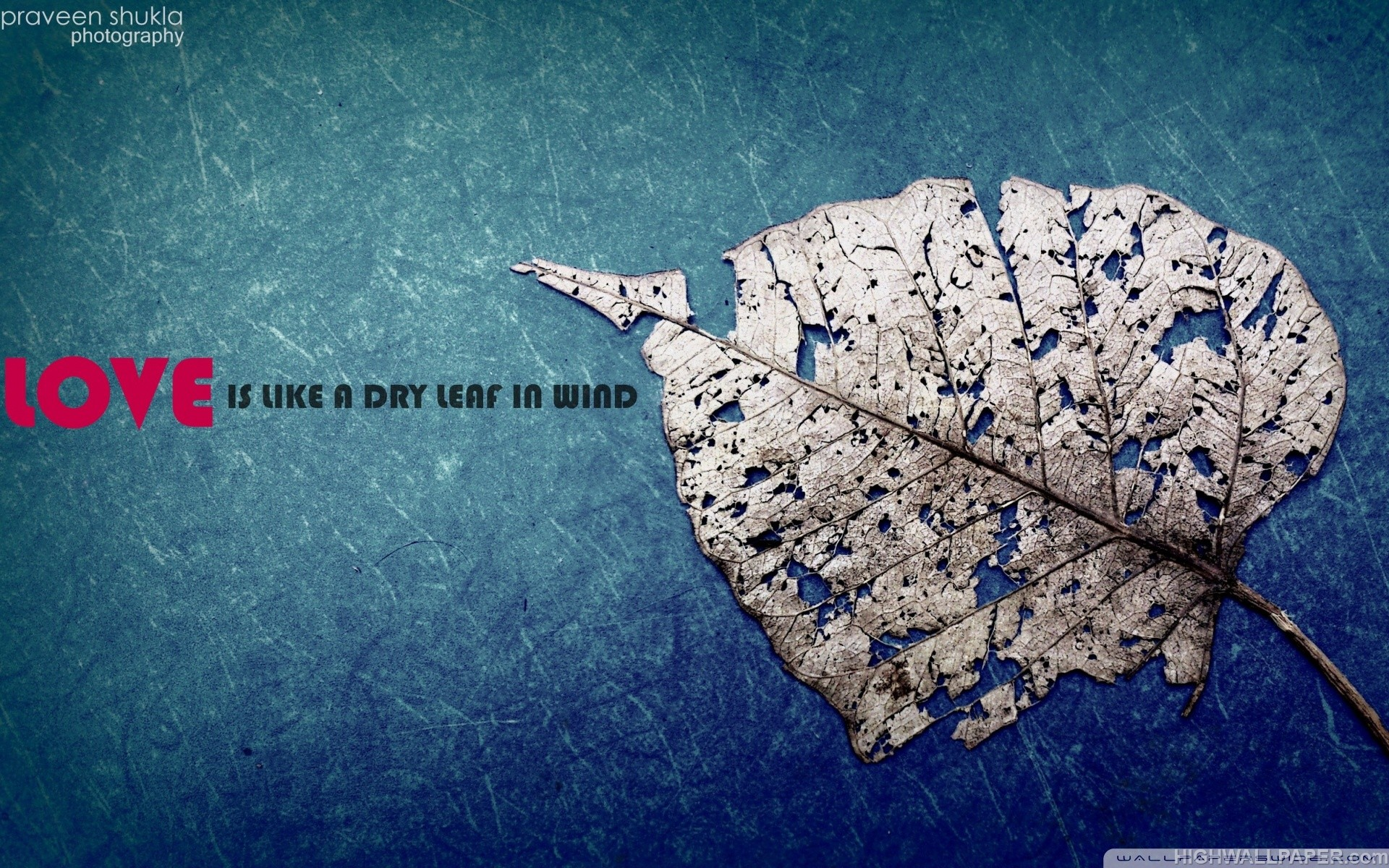 Love is Like A Dry Leaf in  Wind