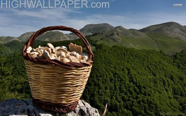 Basket Full of Mashrooms-602×376