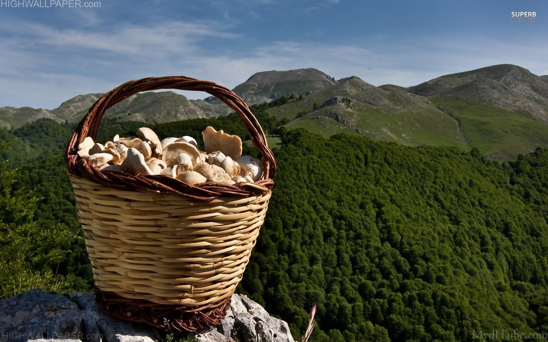 Basket Full of Mashrooms