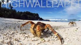 Crab on Sea Shore-275x155