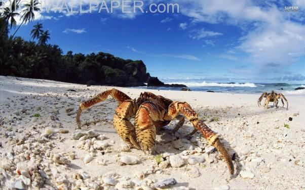 Crab on Sea Shore-602×376