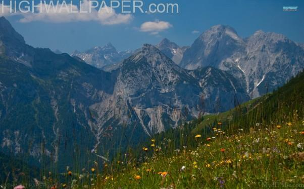 Flowers and Mountains-602×376