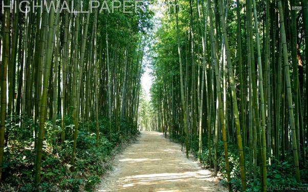 Road through Bamboo jungle-602x376