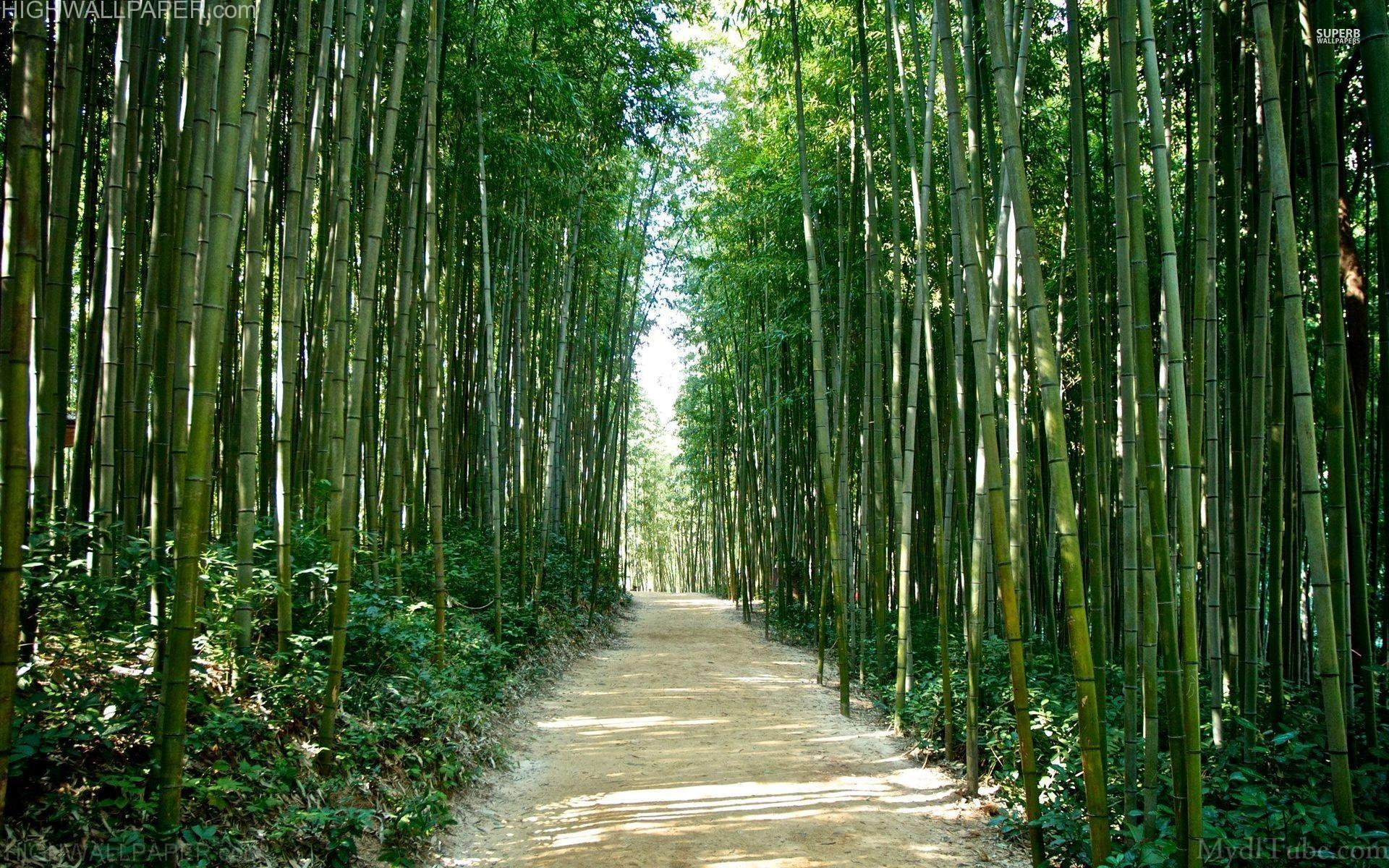 Road through Bamboo jungle