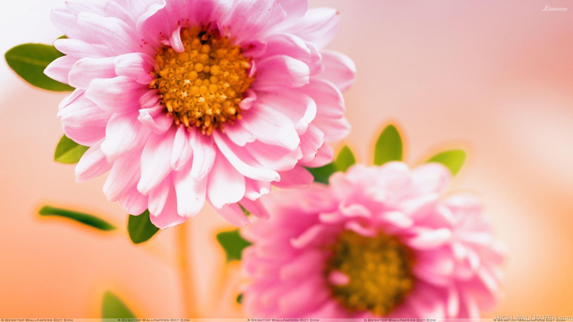 Pair Of Pink Floral Flower