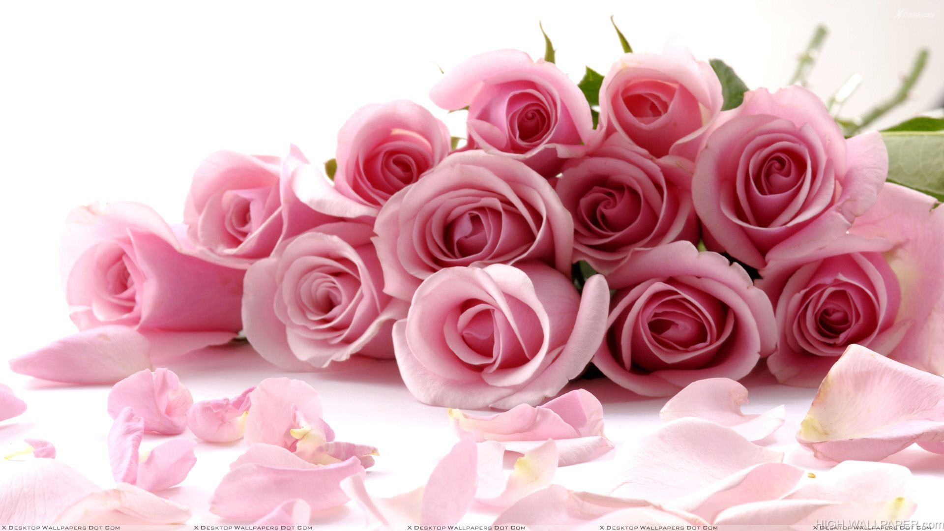 Pink Roses On White Background Closeup