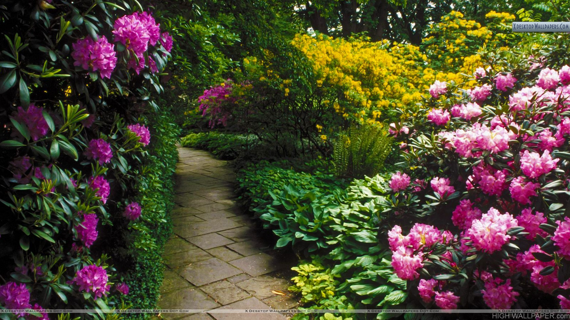 Rhododendrons Berggarten Hannover Germany