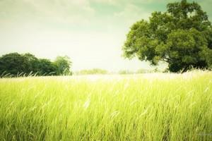 Shining Green Farm
