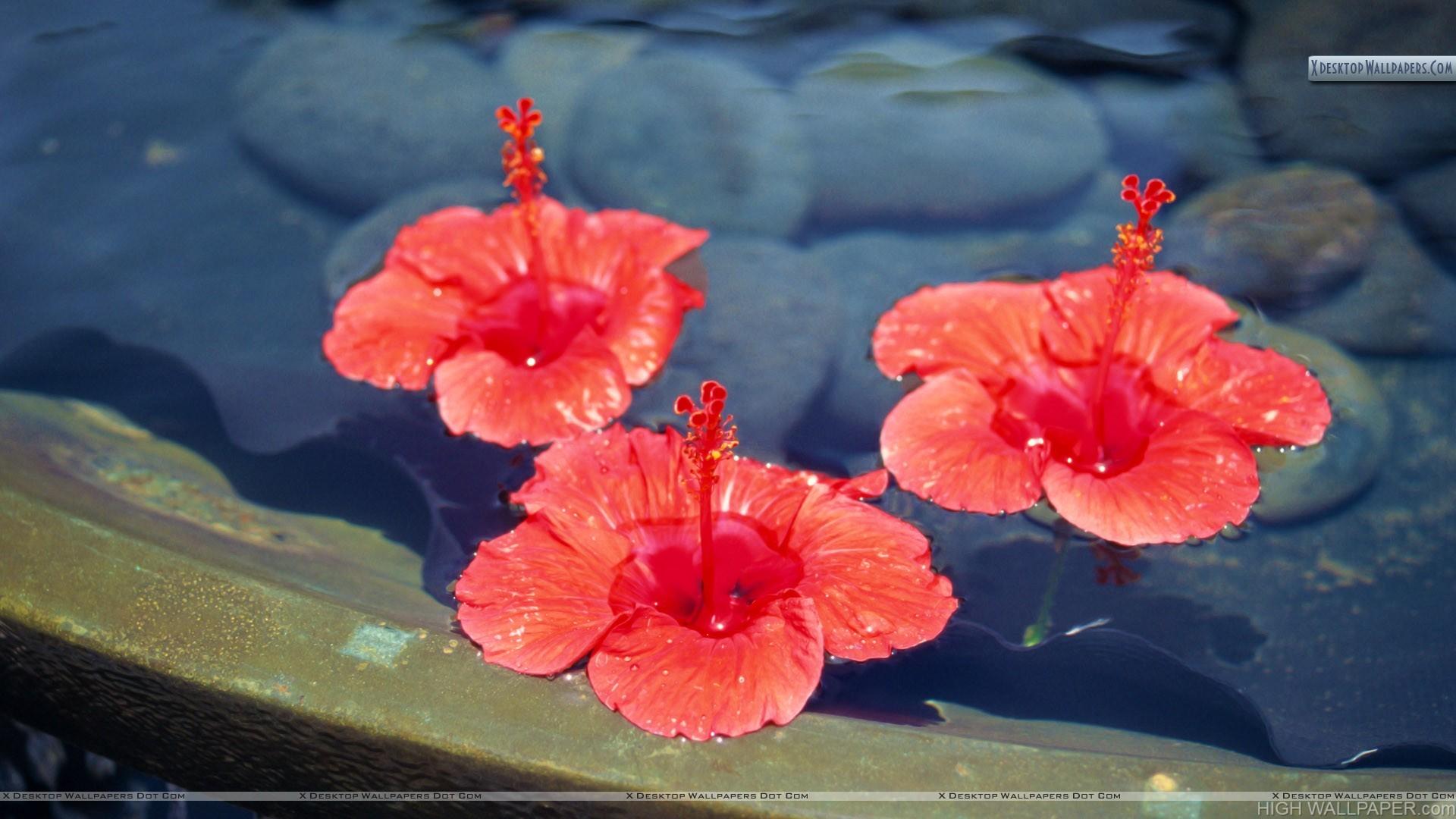 Three Orange Flowers Floating on Water