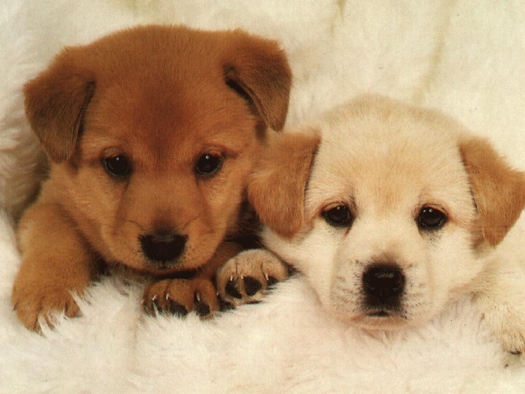 Two Cute Puppy