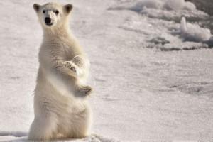 White Bear Is Watching Something