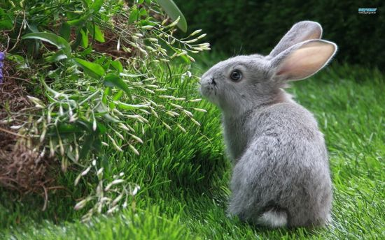Rabbit Eating in Green Grass