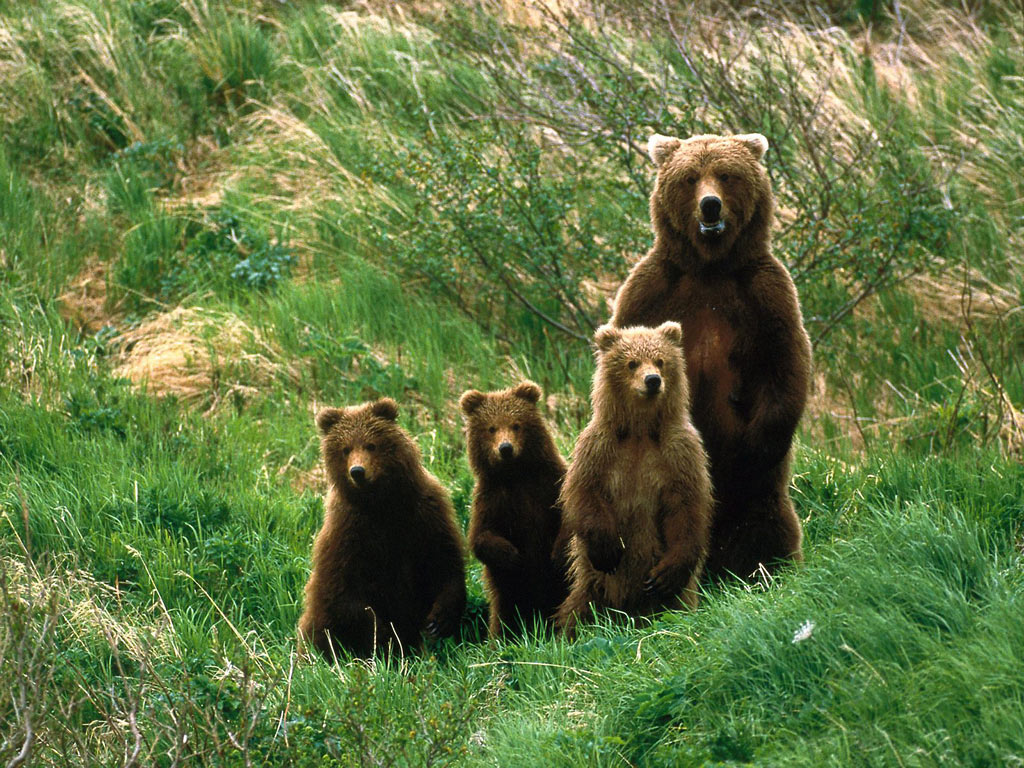 Bear Family – Baby Bears