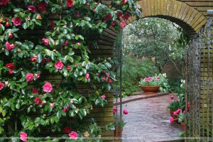 Woodland Garden Archway Filoli Estate Near Woodside California